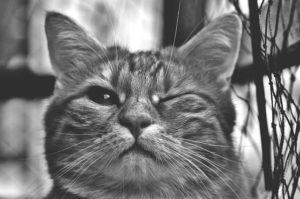 cat-1793139_640