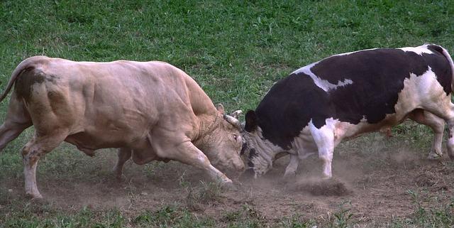 bulls-102764_640(1)