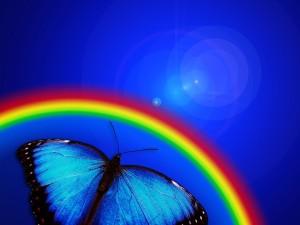butterfly-765126_640