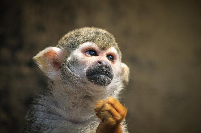 monkey-721108_640